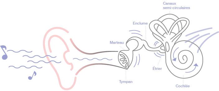 Bruit : Le fonctionnement de l'oreille